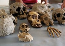 Biological Anthropology Research Paper Topics