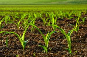 Agriculture Research Paper Topics