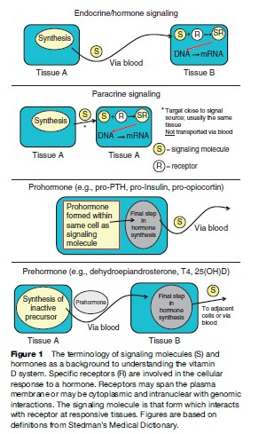 Vitamin D Research Paper
