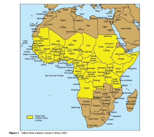Yellow Fever Research Paper